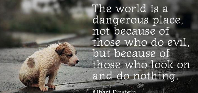 the world is dangerous by einstein